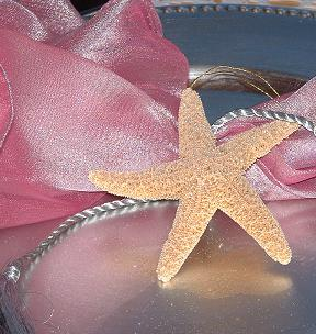 Shell_Glitter_starfish_natural-SD.JPG (23465 bytes)